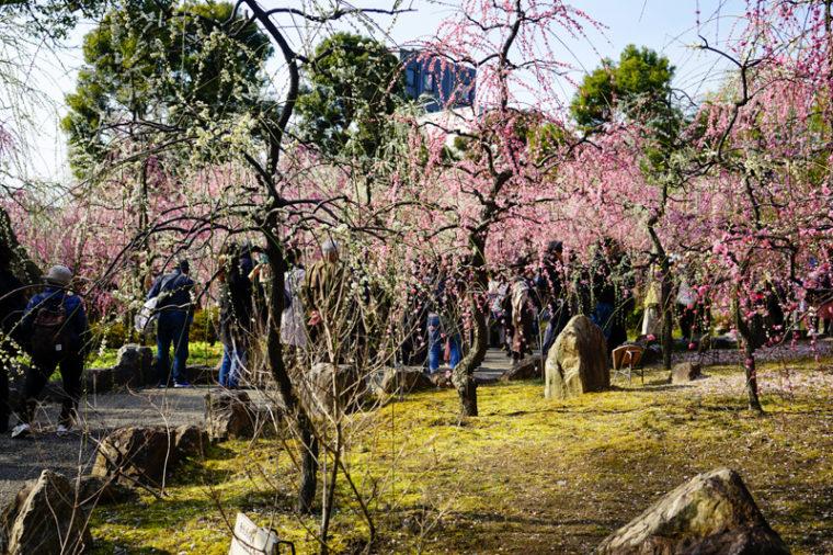 京都の梅の名所「城南宮 神苑」|見頃やアクセスを紹介!