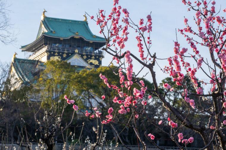 関西でおすすめの梅の名所 大阪城公園