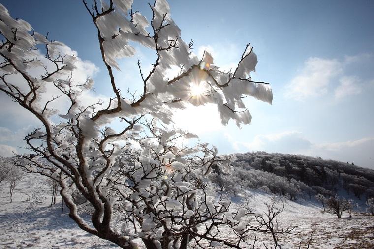 奈良のおすすめ絶景スポット「三峰山 樹氷まつり」