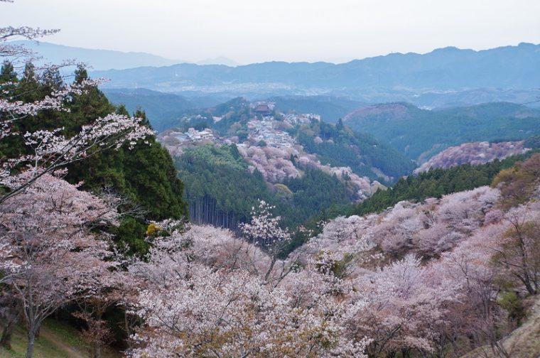 奈良のおすすめ絶景スポット「吉野山の桜」