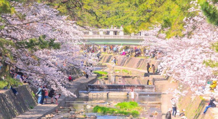 関西のおすすめ桜の名所「夙川河川敷緑地(夙川公園)」