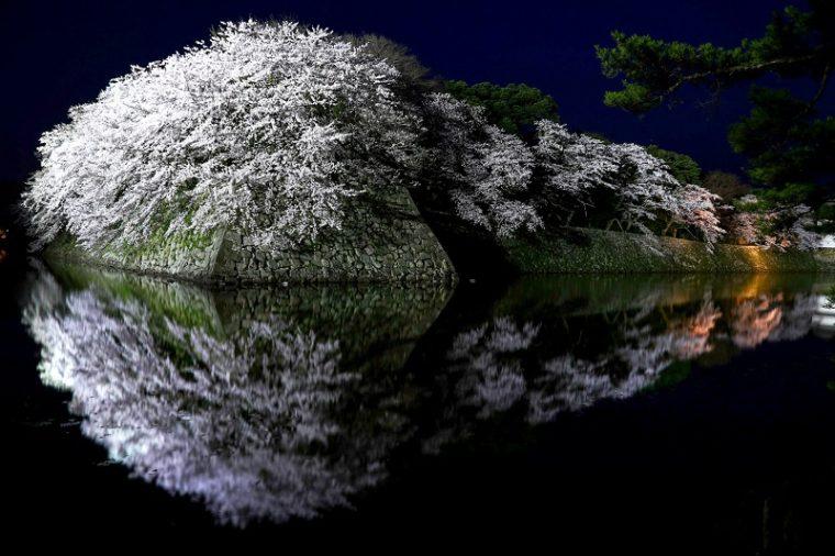 滋賀のおすすめの絶景「彦根城の桜ライトアップ」