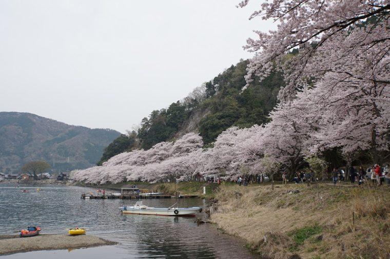 滋賀のおすすめの絶景「海津大崎の桜」