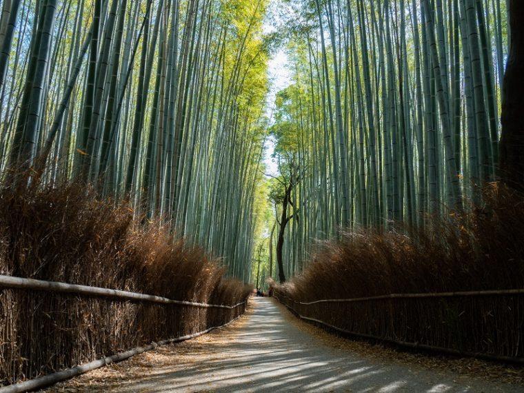 京都のおすすめ絶景スポット「竹林の小径」