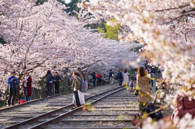 関西のおすすめ桜の名所「蹴上インクライン」