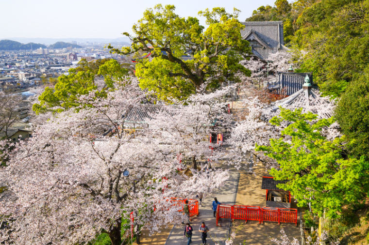 和歌山の桜の名所「紀三井寺」|見頃や開花情報、アクセスなどを紹介