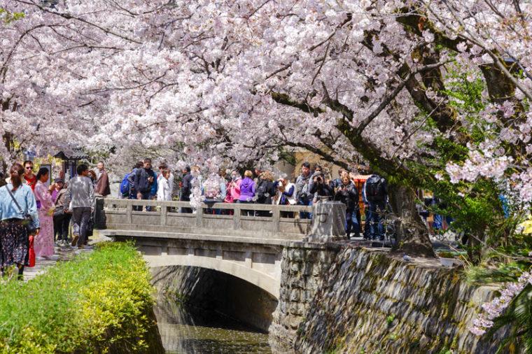 京都の桜の名所「哲学の道」|見頃や開花情報、アクセスなどを紹介