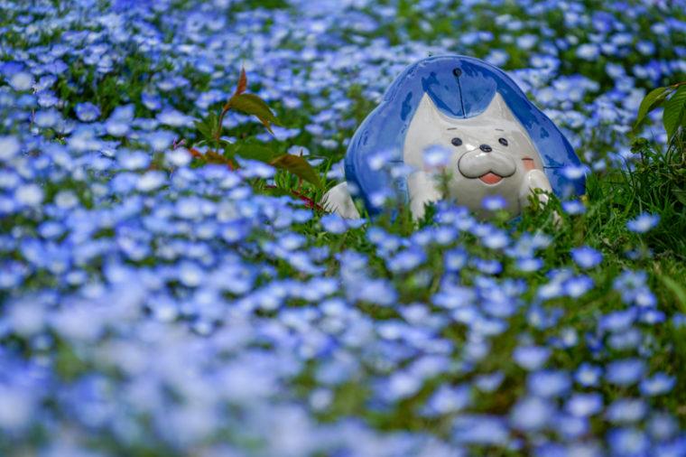 100万株のネモフィラ祭り「大阪まいしまシーサイドパーク」見頃やアクセスなどを紹介