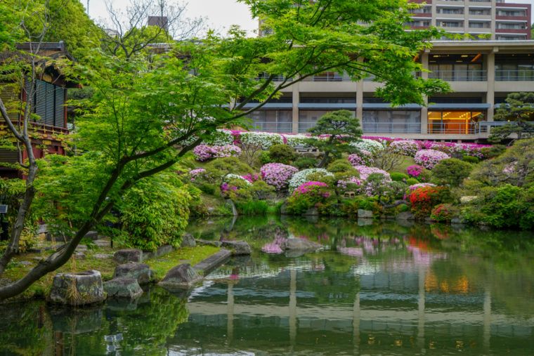 【2020年】兵庫のツツジの名所「相楽園」|見頃や開花情報、アクセスを紹介!