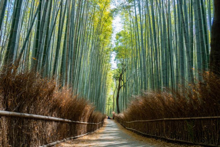 関西の絶景「竹林の小径」