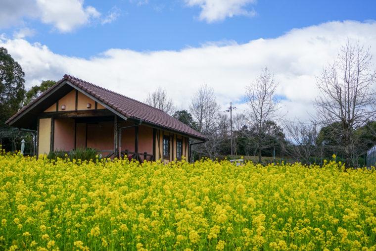 大阪の絶景「堺・緑のミュージアム ハーベストの丘」