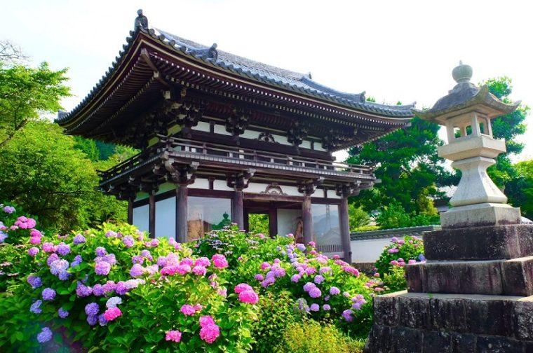 京都のあじさい寺「丹州観音寺」|見頃やアクセスなどを紹介