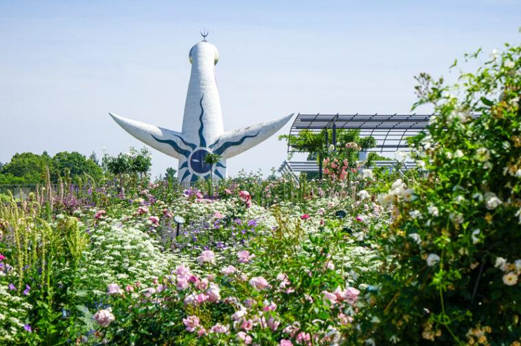 大阪のバラ園「万博記念公園 平和のバラ園」見頃やアクセスなどを紹介!