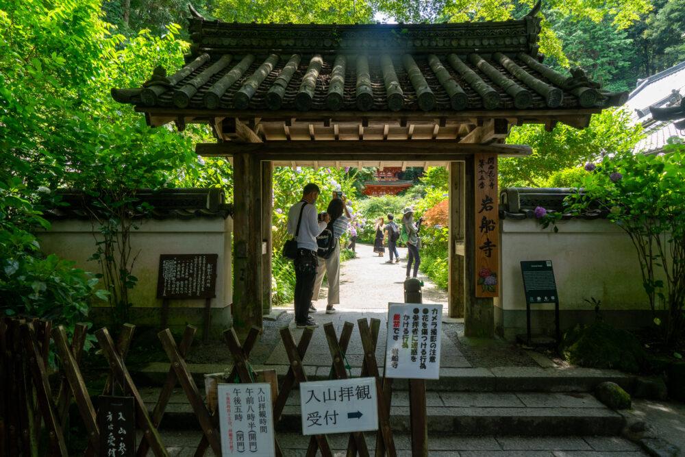 岩船寺の紫陽花(あじさい)